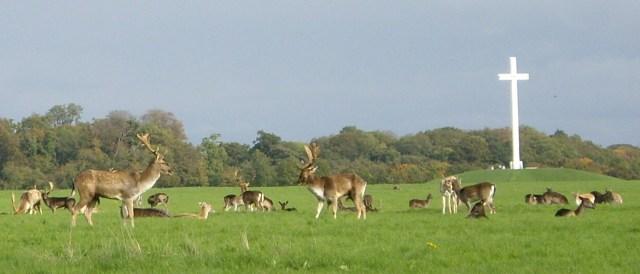 Deer_by_papal_cross